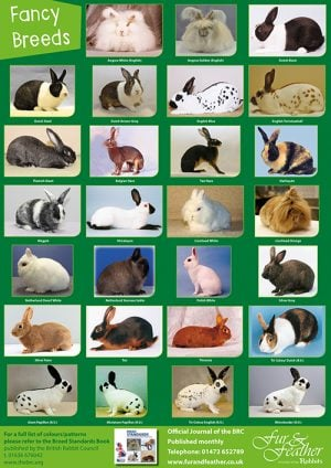 Breed Posters